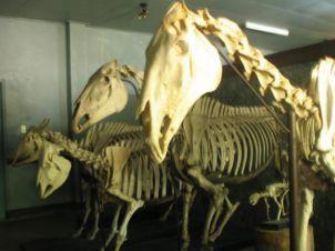 visit-anatomy