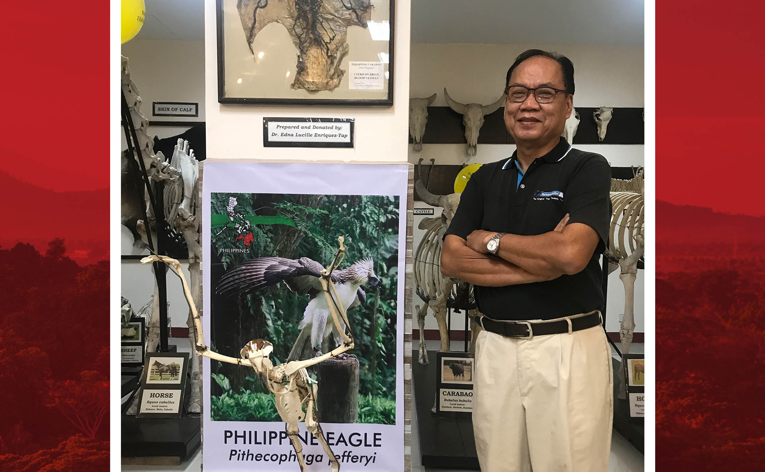 Solis Museum receives PH Eagle skeleton from PEF