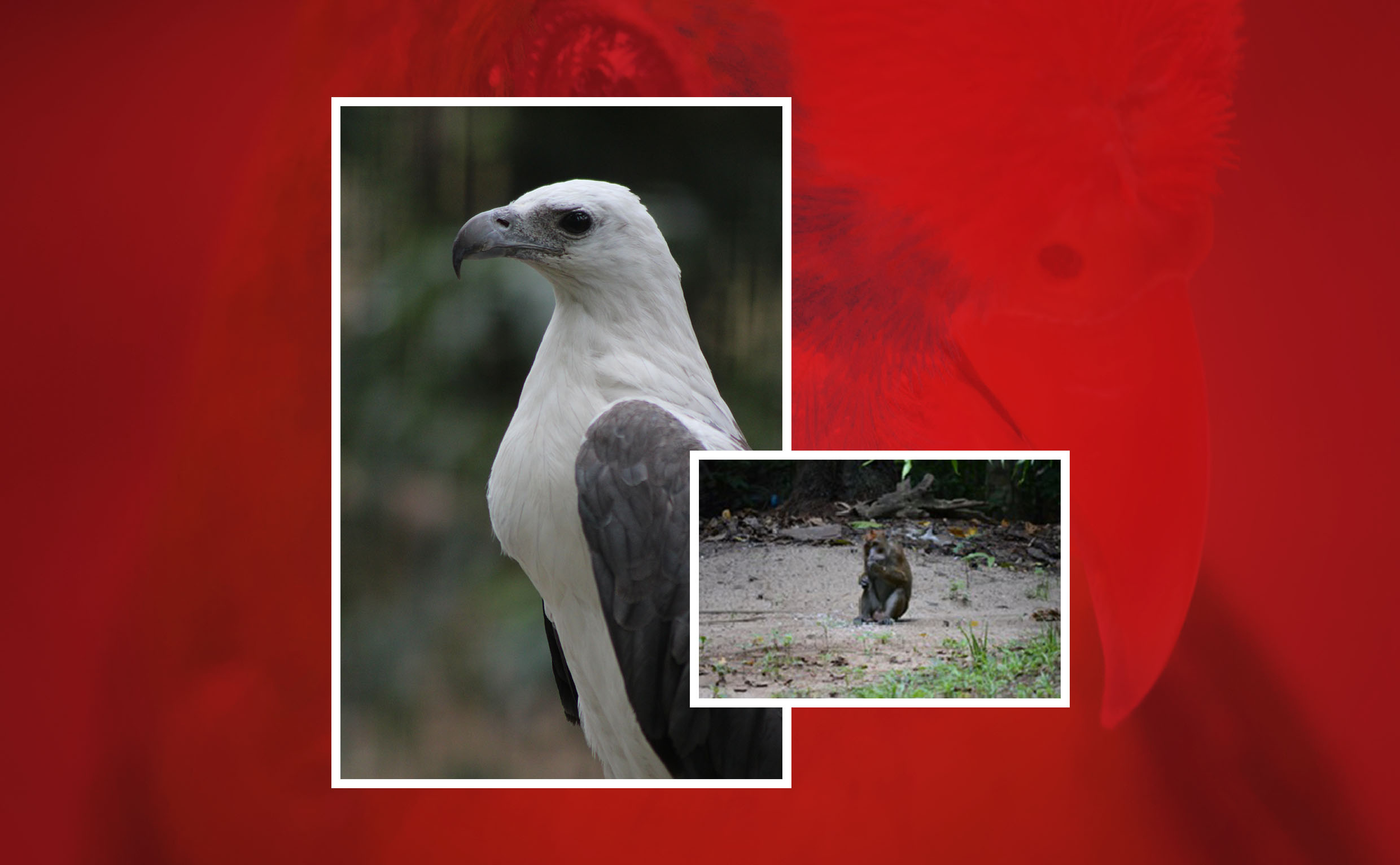 UPLB biologists talk about zoonoses from birds, monkeys