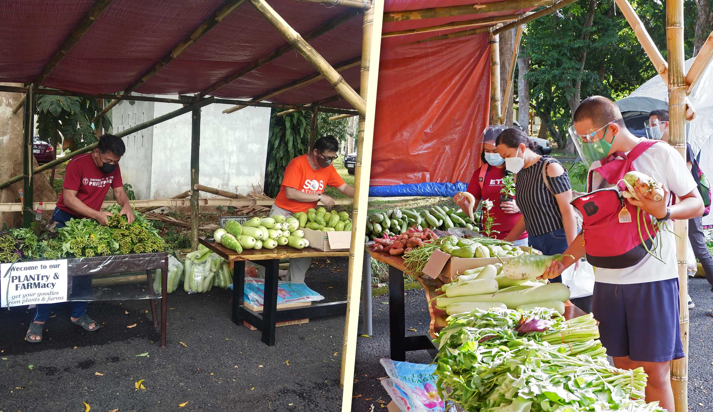 UPLB's community pantry offers plants and local farm produce